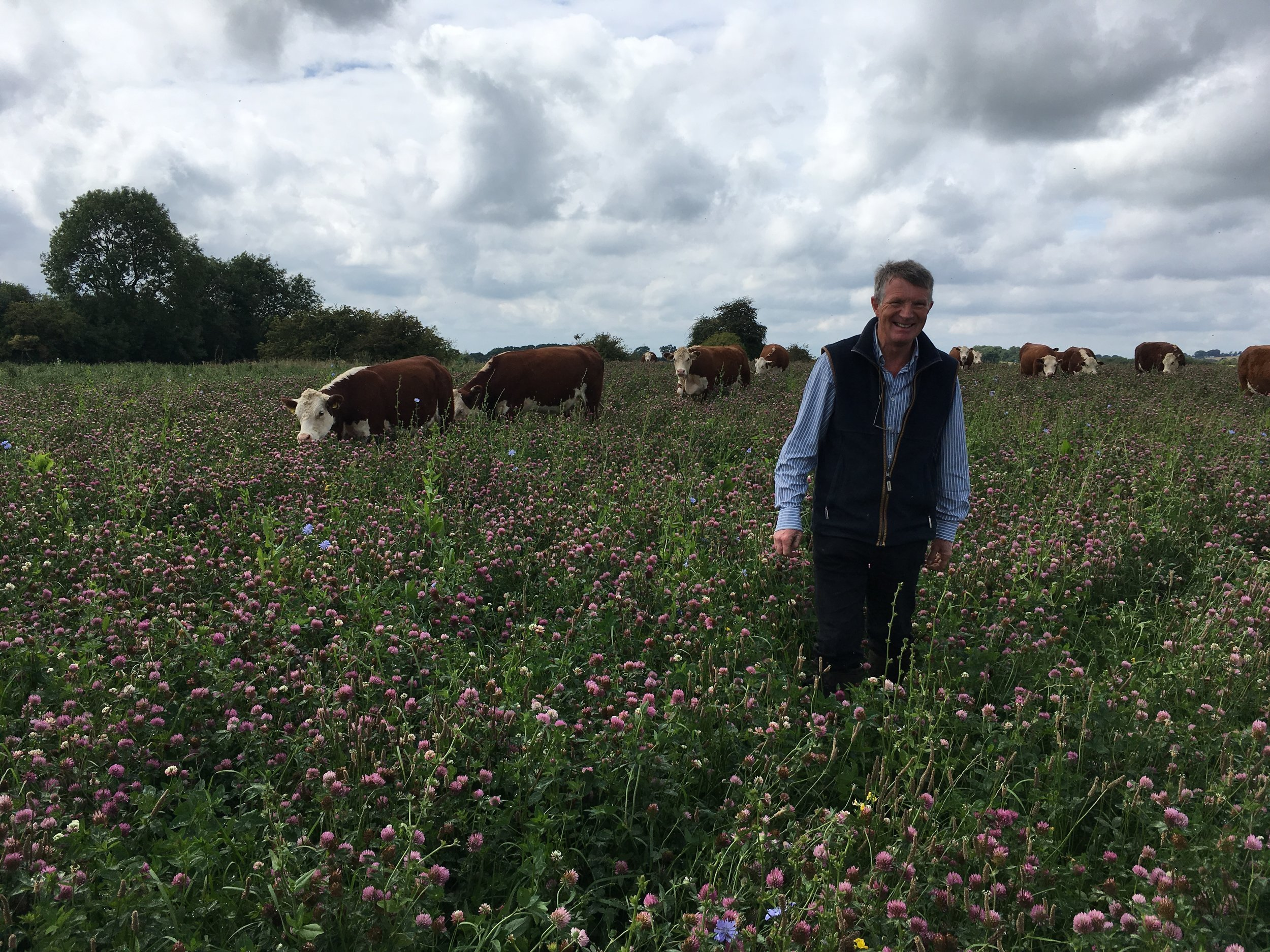 A cheery Ian Boyd with his cows in a field of clover and wild-flowers knee high. The whole farm is covered in wildflowers!
