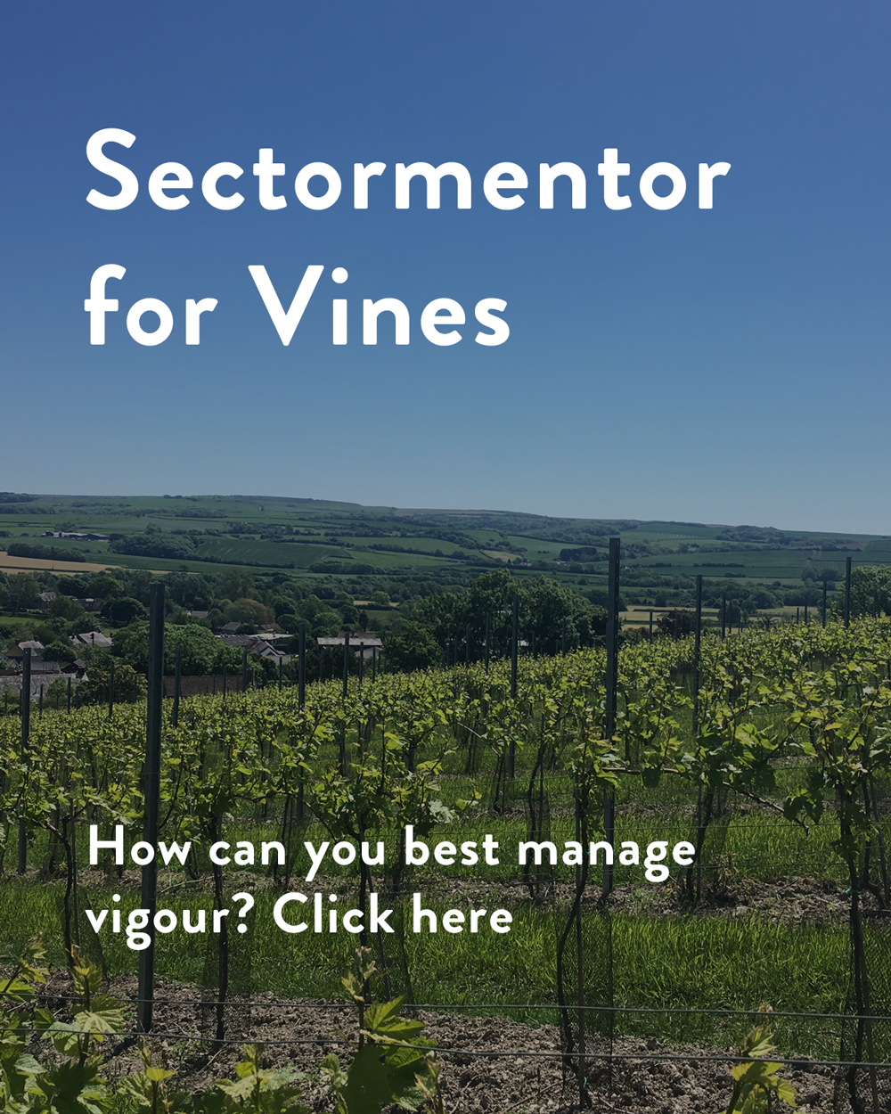 vines.sectormentor.com